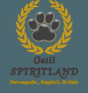 Gatil Spiritland, Norueguês da Floresta, Ragdoll, British Shorthair