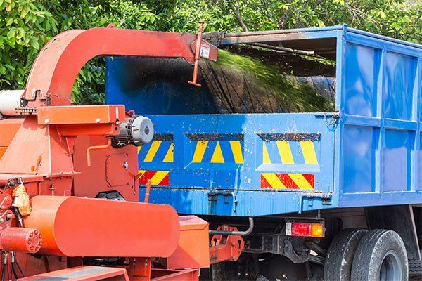 Tree pruning and removal in Oahu
