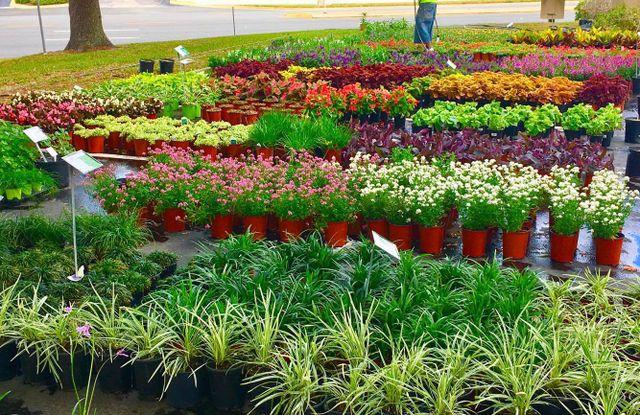Helping Your Garden Grow