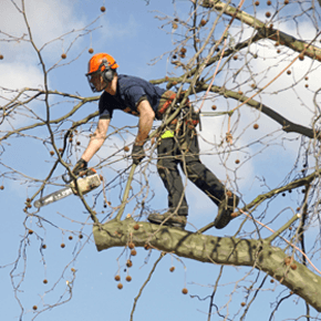 tree services sittingbourne kent goldfinch tree surgery. Black Bedroom Furniture Sets. Home Design Ideas