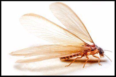 exterminator in Huntersville, NC