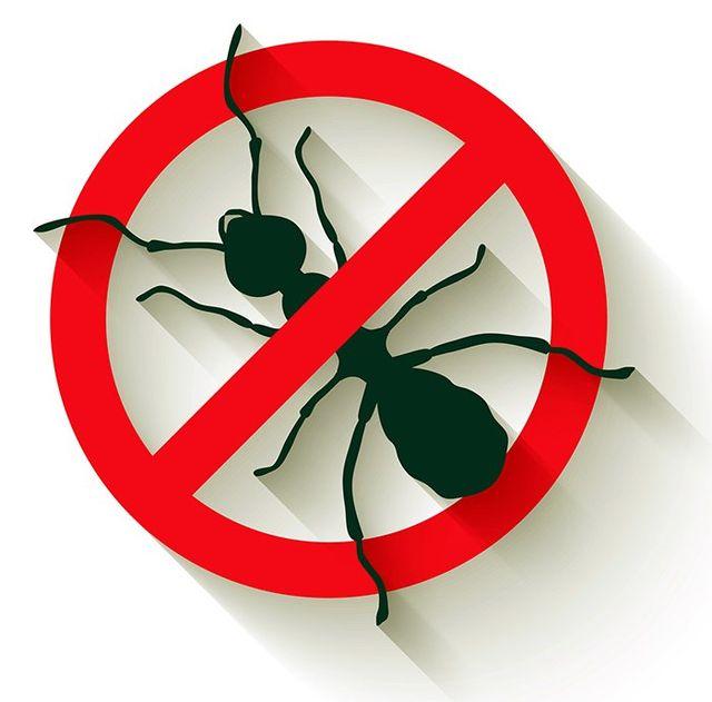 termite control in Pineville, NC