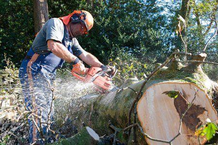 tree cutting specialist