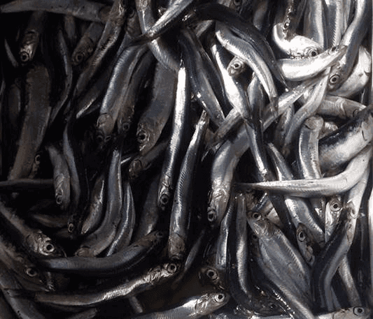 dei pesci freschi