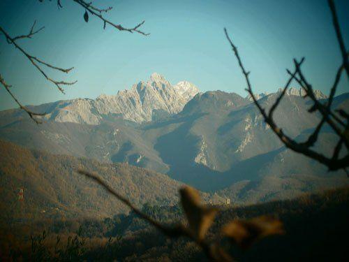 vista tra i rami delle montagne