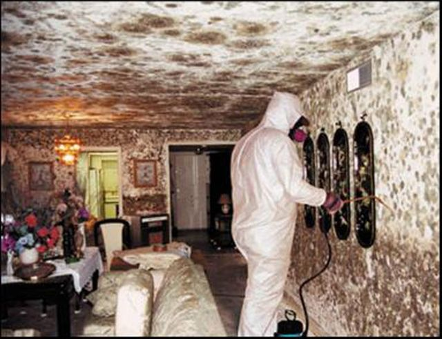 Multiple contaminants in moldy buildings