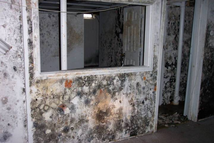Moldy room