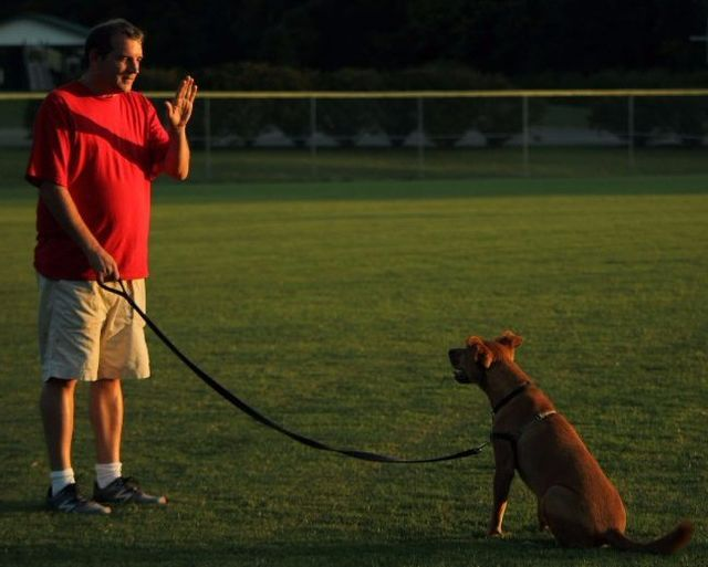 about-homeschooled-hound Dog Training