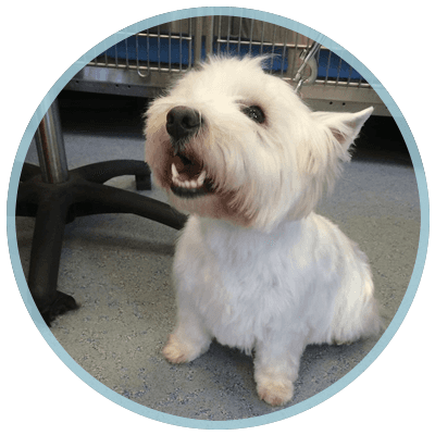 Pet Microchipping From Pampered Palace Pooches