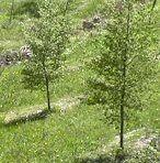 alberi in campagna