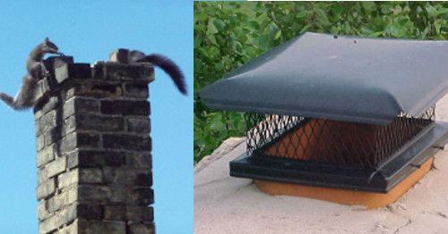 An Open Chimney is an Invitation to Animal Invaders