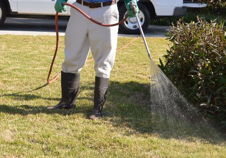 Applying insecticide to a lawn