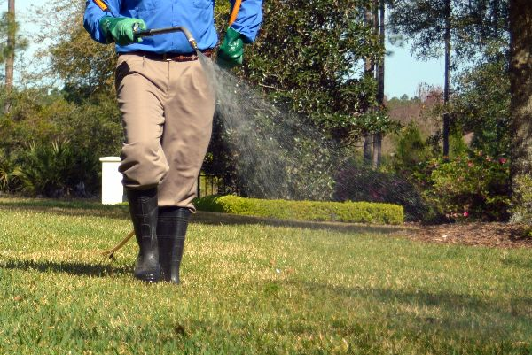 Weeding a lawn with herbicide.