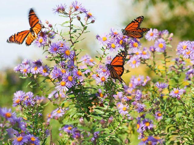 university of the sunshine coast butterfly garden bike hub e street footpath sippy downs