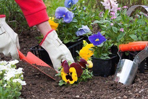 Giardiniere che sta sistemando i fiori