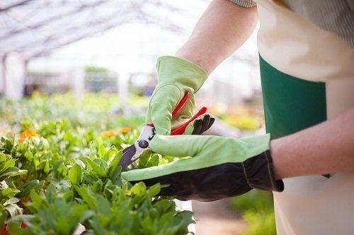 Un giardiniere che sta potando le piante