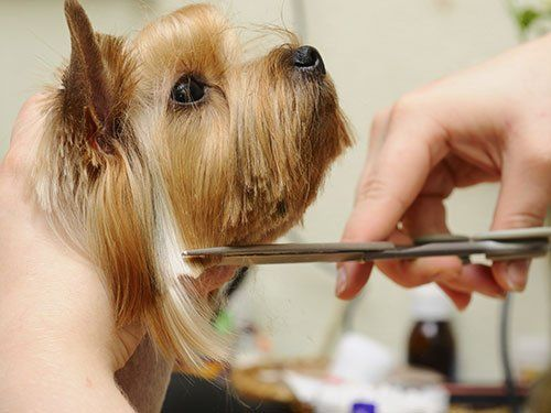 Dog grooming taylors sc greer sc tallyho kennels contact tallyho kennels for dog grooming assistance solutioingenieria Images
