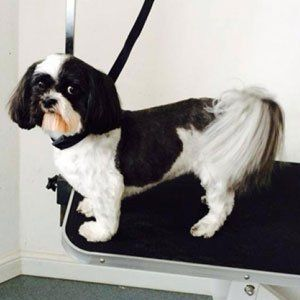 Stylish and affordable dog grooming service