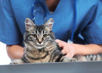 vaccino cane, vaccino gatto, cure mediche per animali