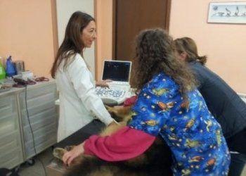 esami medici, diagnostica, esami veterinari