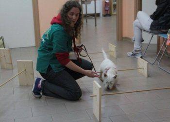educatori cani, medicina comportamentale, educazione animali