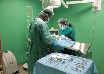 chirurgia, chirurgia specialistica, chirurgia generale veterinaria