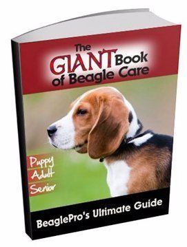 Beagle Pain Syndrome | Understanding This Disease