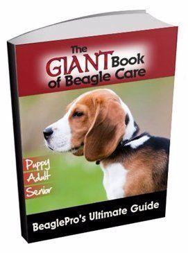 Beagle Information Center | Beagle Names