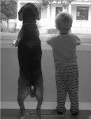 Beagle and little boy looking out window