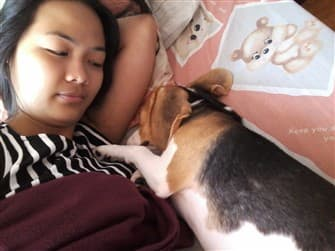 beagle-cuddled-up-to-owner