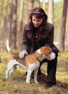 Beagle with owner in the woods