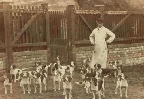 A pack of Beagles from 1885