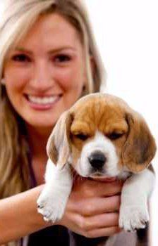 woman holding Beagle puppy
