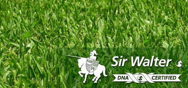 Sir Walter Turf | Brisbane grass supplier | Jimboomba Turf