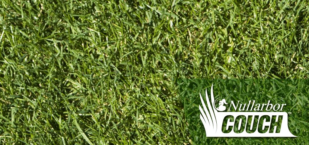 Nullarbor Couch | Brisbane grass supplier | Jimboomba Turf