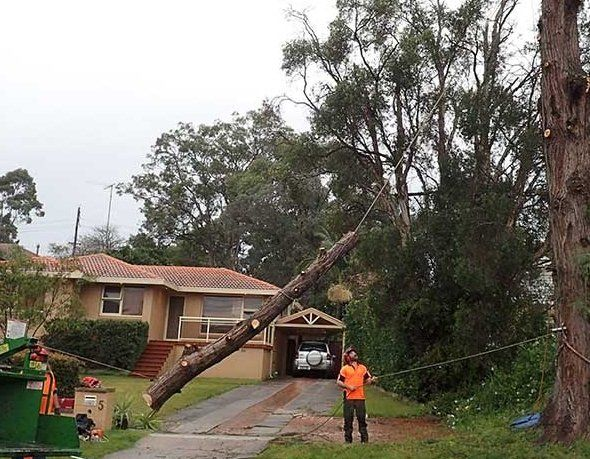 Tree Removal Rouse Hill
