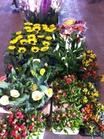viole, piante ornamentali da esterno, crisantemi, Phalenopsis, Anthurium e un vasto assortimento di piante verdi.
