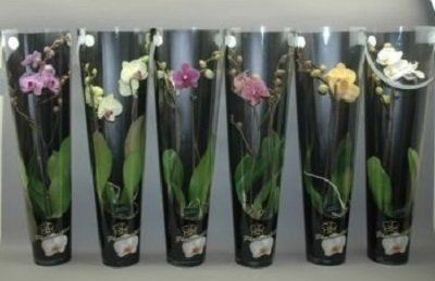 orchidee de tutti  olori