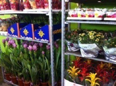 fiori recisi di ogni qualità e colore