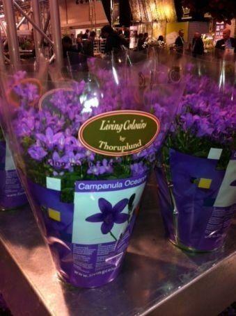 allestimenti su misura e  composizioni floreali  di ogni tipo