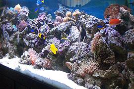 Inside aquarium