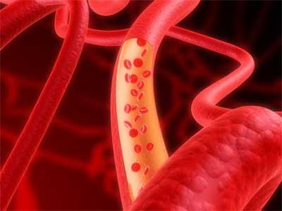 un disegno riguardante il flusso sanguigno