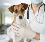 esami del sangue cane