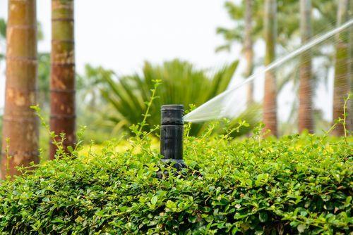 garden with stream after garden irrigation in Kailua, HI