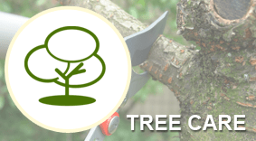 tree removal nassau county ny aaa tree new york state and isa certifed arborist tree services in nassau county queens ny arborpro inc