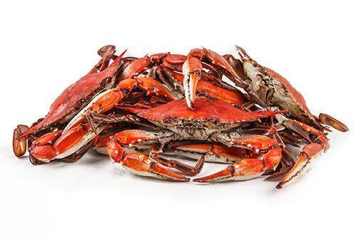 Seafood Market | Myrtle Beach, SC | Platt's Seafood