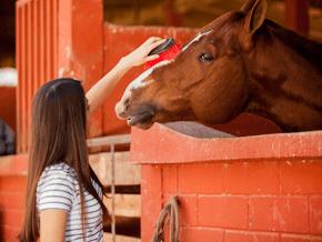 Horse riding - Hyndburn, Accrington, Lancashire - Horseriding - Accrington Riding Centre
