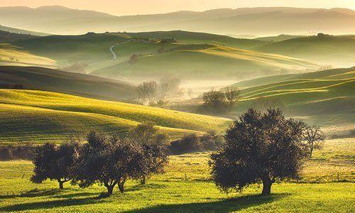 Alberi,verdi prati e colline