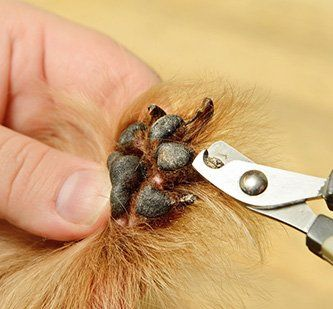 Top Class Dog Grooming Training In Cookstown Northern Ireland