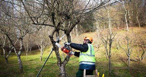 Professional man with chainsaw pruning in winter